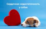 Препараты при сердечной недостаточности у собак