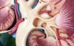 Вазоренальная гипертензия развивается вследствие